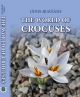 Crocus      The World of Crocuses  for Europe