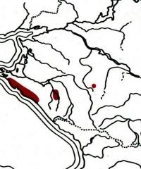 Anemone banketovii